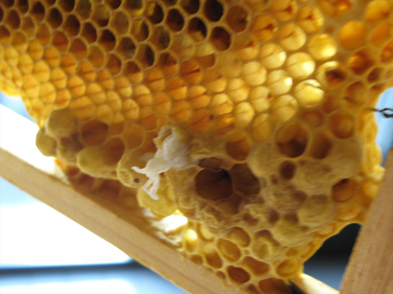 蜂の巣放置状態